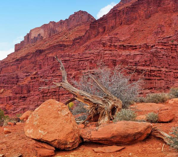 Cedar Tree Art Print featuring the photograph Cedar Wood Tree, Fisher Towers, Moab by Fotomonkee