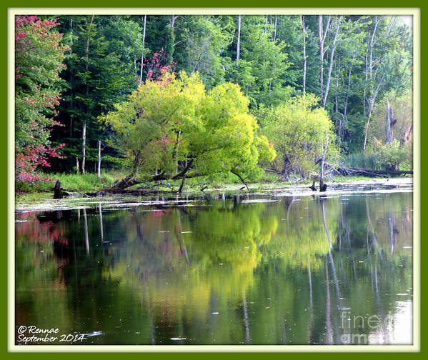 Water Art Print featuring the photograph Reflections by Rennae Christman
