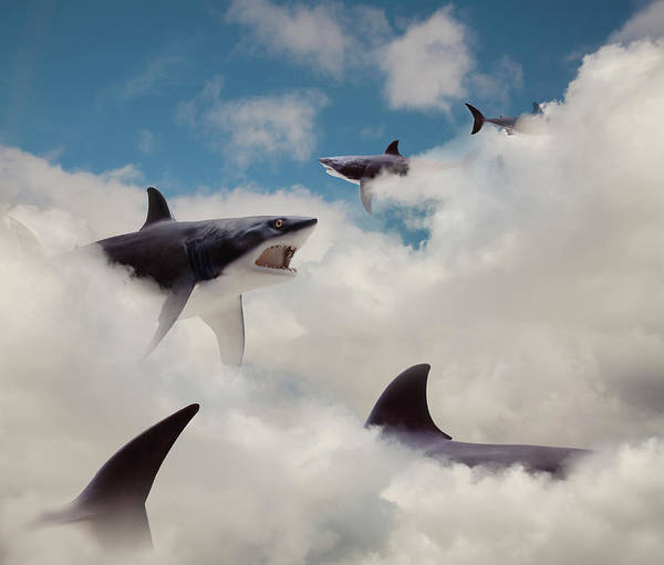 Risk Art Print featuring the photograph Sharks Floating In Clouds by John M Lund Photography Inc