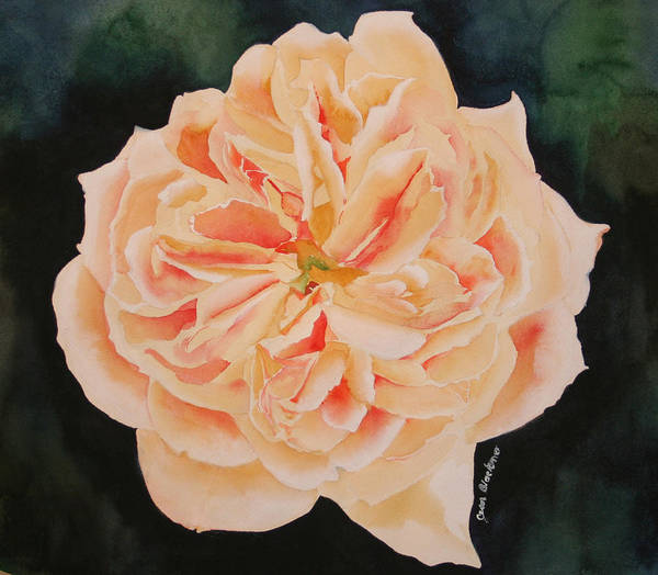 Rose Art Print featuring the painting English Rose by Jean Blackmer