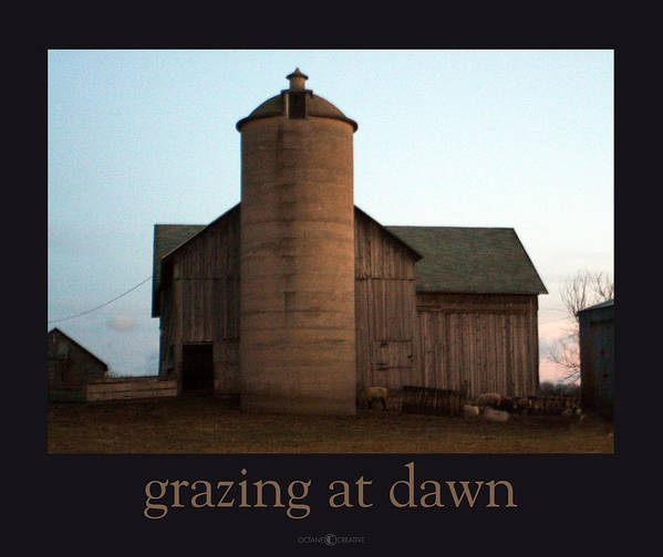 Barn Art Print featuring the photograph Grazing at Dawn by Tim Nyberg