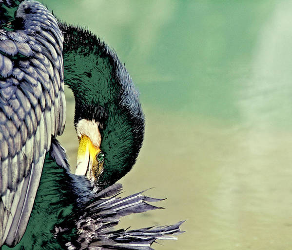 China Art Print featuring the photograph The Cormorant by Marla Craven