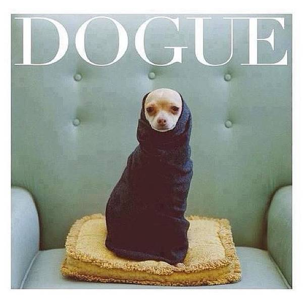 Dogue Art Print featuring the photograph 😂😂😂😂 #dogue #vogue by Matheo Montes