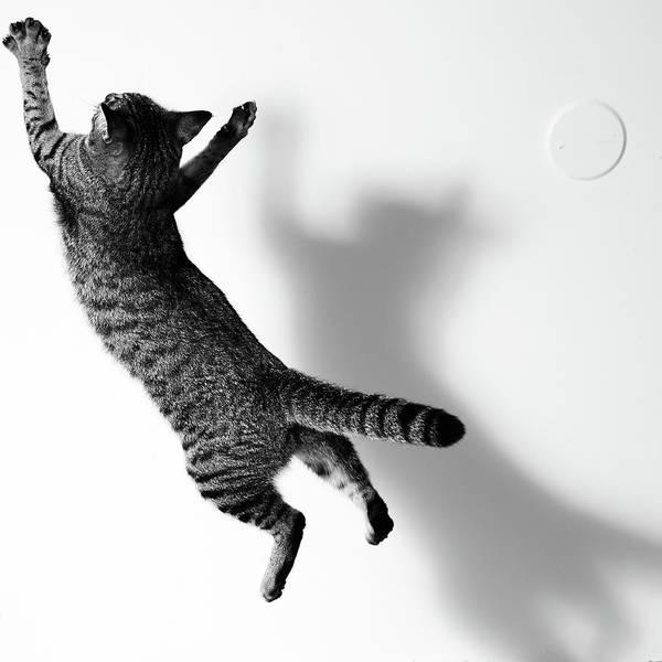Pets Art Print featuring the photograph Jumping Cat by Akimasa Harada