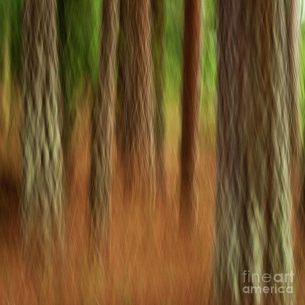 Abstract Art Print featuring the photograph Pine Trees by Heiko Koehrer-Wagner