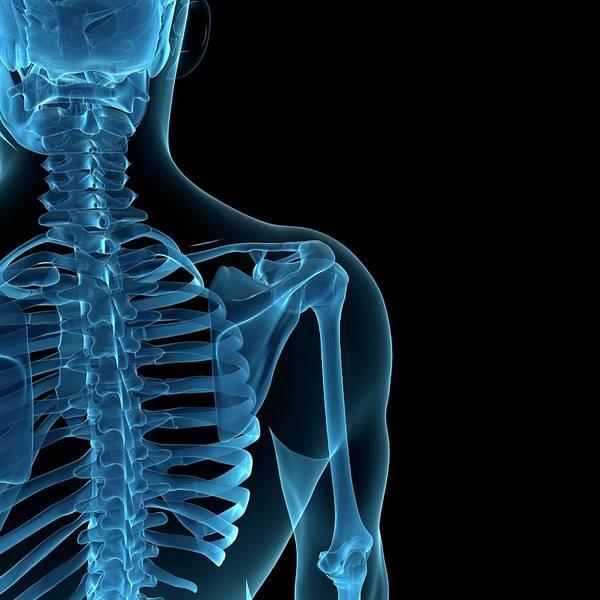 Anatomy Art Print featuring the digital art Upper Body Bones, Artwork by Sciepro