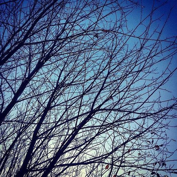 Squirrell Art Print featuring the photograph Bare Branches by Nic Squirrell