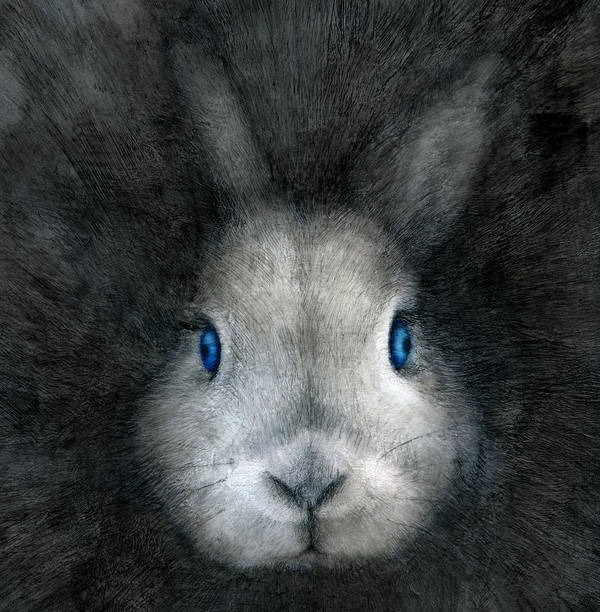 Rabbit Art Print featuring the drawing Blue Eyes by Penny Collins
