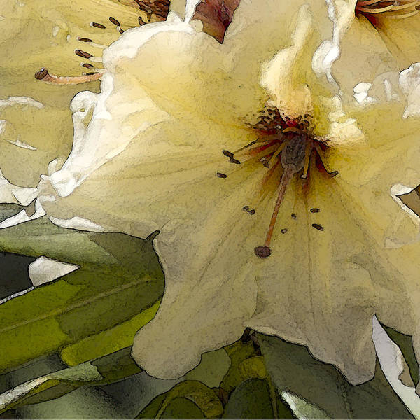 Lily Art Print featuring the photograph Creme Rhody by Stephen Prestek