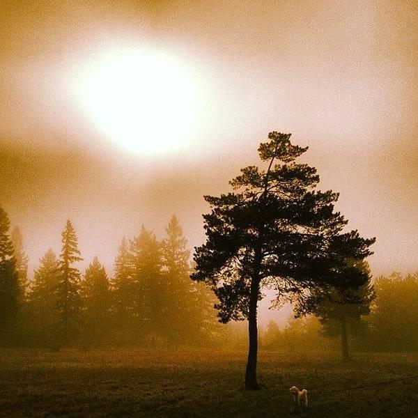Beautiful Art Print featuring the photograph Morning Light by Blenda Studio