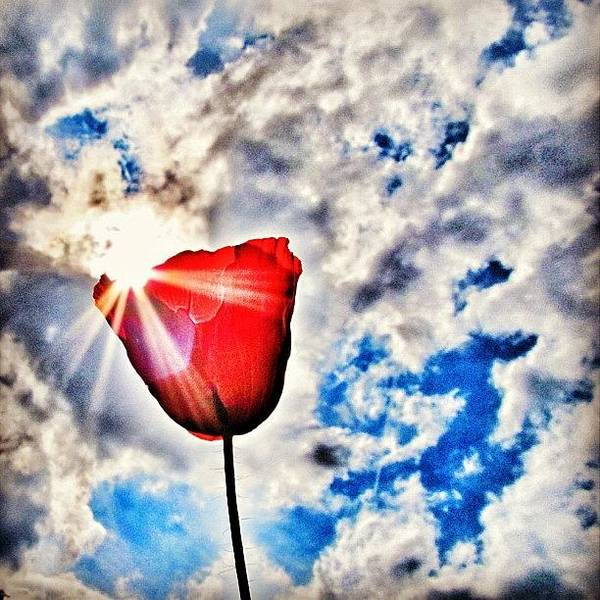 Nature Art Print featuring the photograph High As A Sky by Marianna Mills