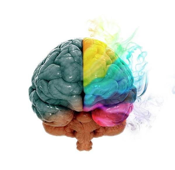 White Background Art Print featuring the digital art Human Brain, Artwork by Andrzej Wojcicki