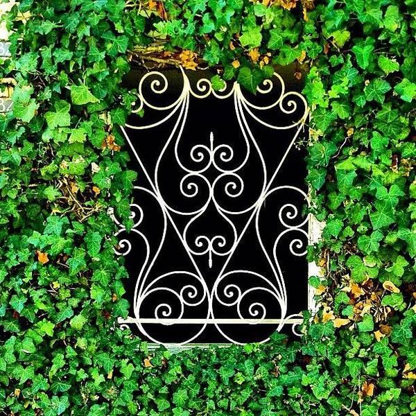 Enjoythedetail Art Print featuring the photograph Ivy Frame by Julie Gebhardt