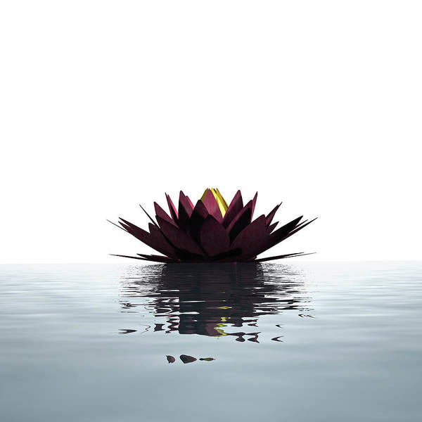 White Background Art Print featuring the photograph Lotus Flower Floating On The Water by Artpartner-images