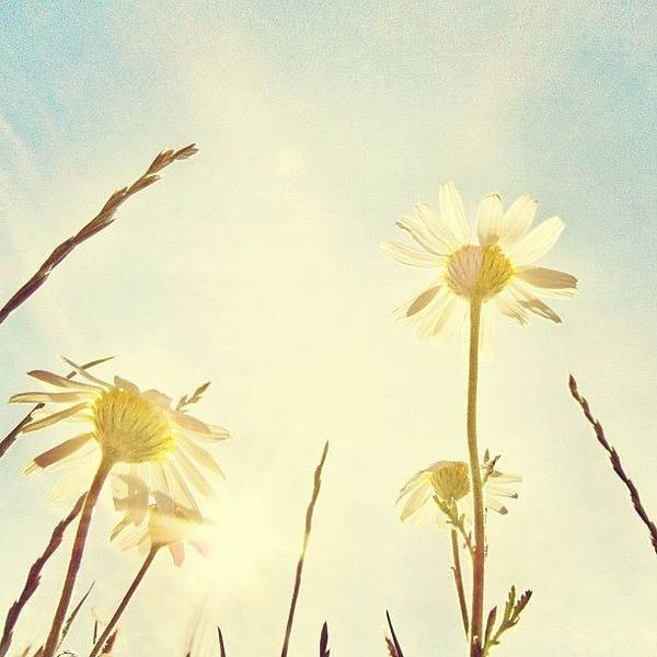 Summer Art Print featuring the photograph #mgmarts #daisy #all_shots #dreamy by Marianna Mills