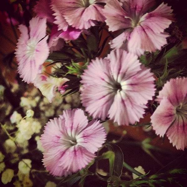 Style Art Print featuring the photograph #purple #flowers #ihavenoclue #pretty by Amber Campanaro