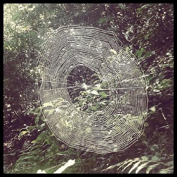 Beautiful Art Print featuring the photograph Spider by Raimond Klavins