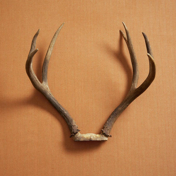 Material Art Print featuring the photograph Still Life Of Deer Antlers On A Fabric by Gwen Rodgers
