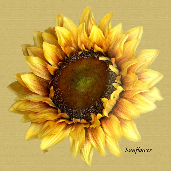 Floral Art Print featuring the digital art Sunflower by Tom Romeo