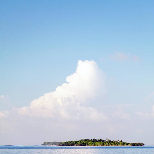 Tropical Tree Art Print featuring the photograph Tropical Island In The Maldives by Subman