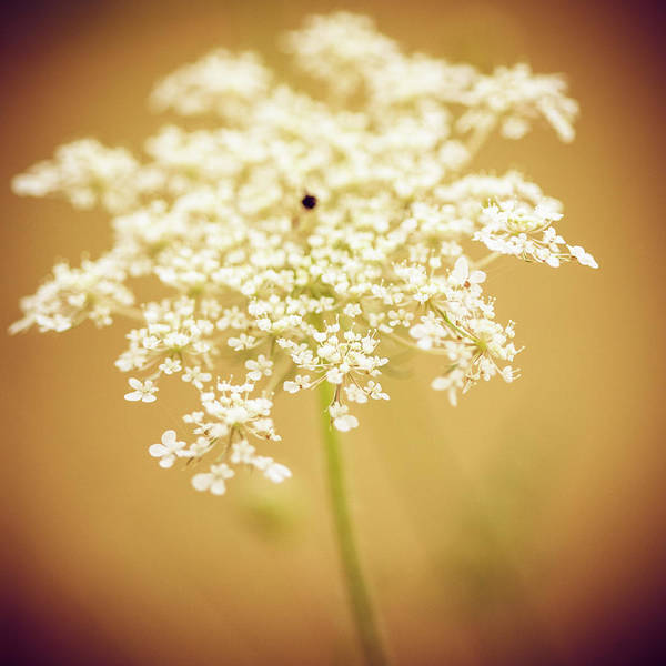 Creativity Art Print featuring the photograph Wildflower by Jeja