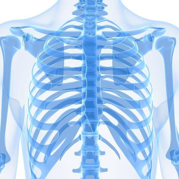 Square Art Print featuring the digital art Upper Body Bones, Artwork by Sciepro