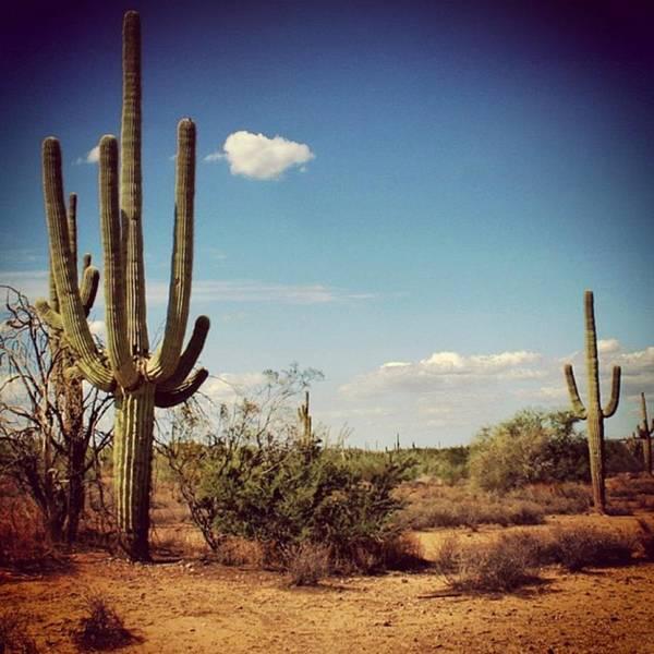 Desert Art Print featuring the photograph Arizona by Luisa Azzolini