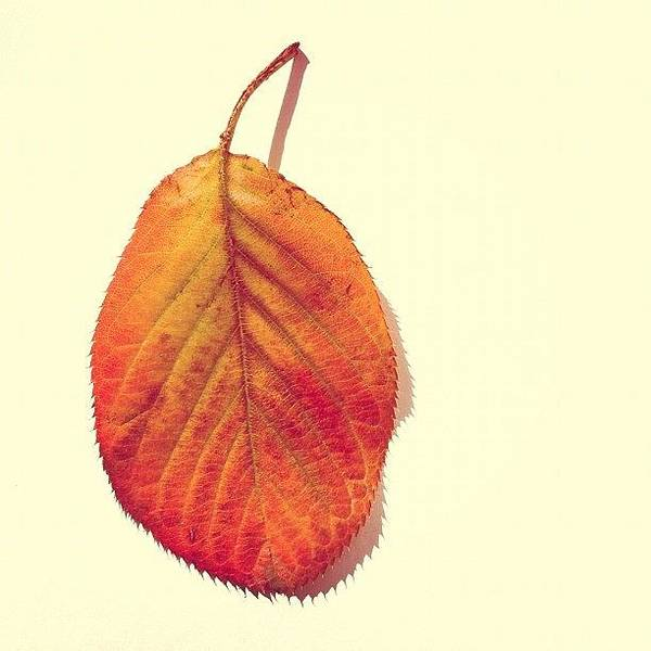 Autumn Art Print featuring the photograph Autumn by Nic Squirrell