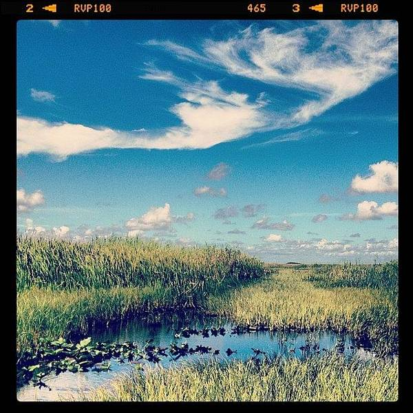 Everglades Art Print featuring the photograph Best Time Everrr. #everglades by Cortney Herron