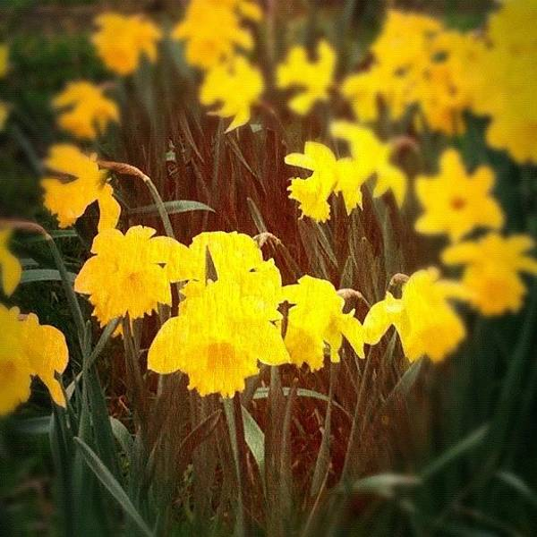 Yellow Art Print featuring the photograph Springs Here by Sam Cottenden