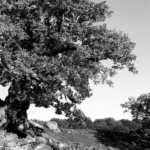 Woodland Art Print featuring the photograph Ancient Oak, Bradgate Park by John Edwards