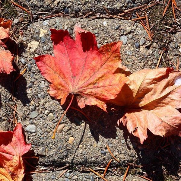 Leaves Art Print featuring the photograph Autumn is Here by Blenda Studio
