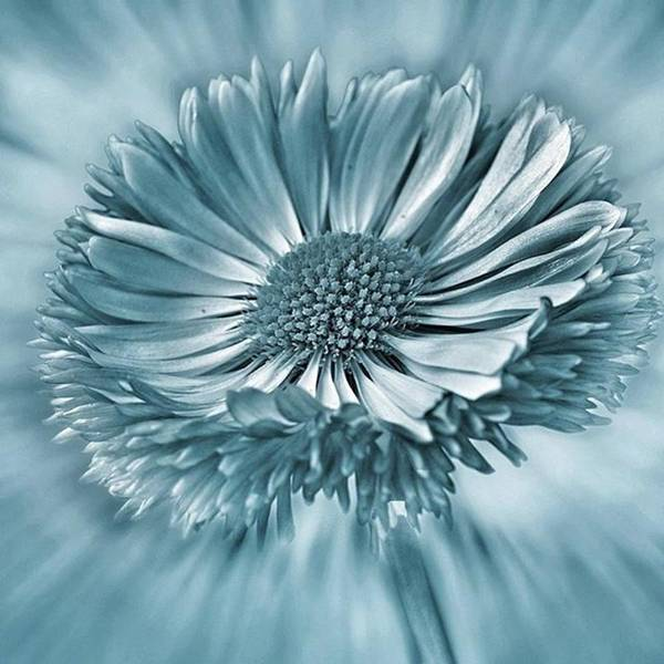 Beautiful Art Print featuring the photograph Bellis In Cyan  #flower #flowers by John Edwards