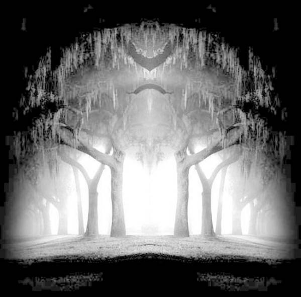 Trees Art Print featuring the photograph Midnight In My Mind by Vicki Lynn Sodora