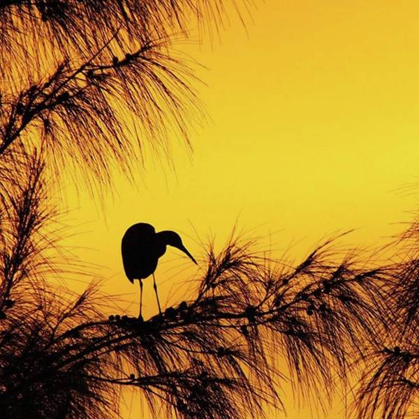 Egret Art Print featuring the photograph One Of A Series Taken At Mahoe Bay by John Edwards