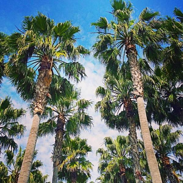 Plant Art Print featuring the photograph #palm #trees Just Make Me #smile by Shari Warren