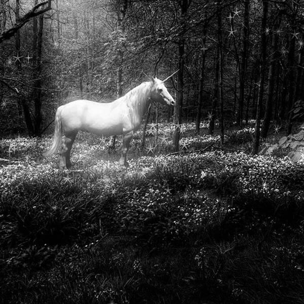 Moonlight Art Print featuring the photograph Under A Moonlit Sky  #fantasy #unicorn by John Edwards