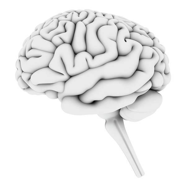 White Background Art Print featuring the digital art Brain, Artwork by Pasieka