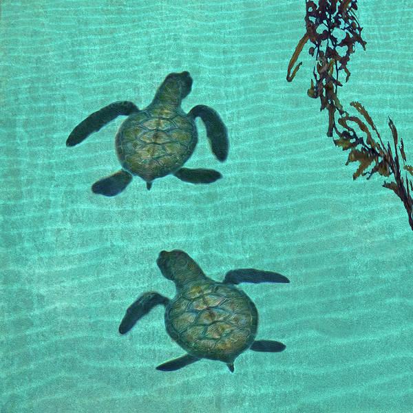 Seaweed Art Print featuring the photograph Baby Sea Turtles by Melinda Moore