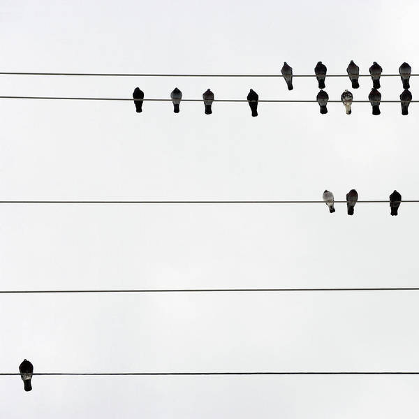 In A Row Art Print featuring the photograph Birds On Electrical Wires by Kendall Mcminimy