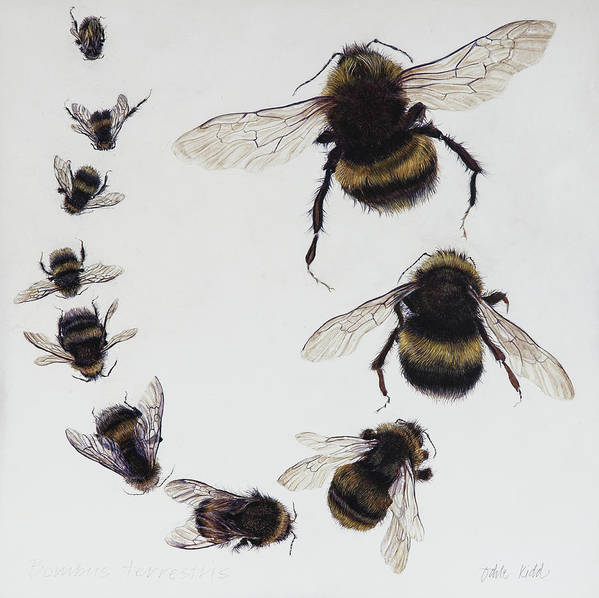 Nature Art Print featuring the painting Bombus by Odile Kidd