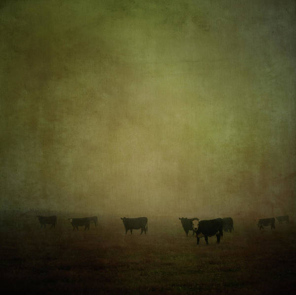 Pets Art Print featuring the photograph Cattle In The Mist by Jill Ferry