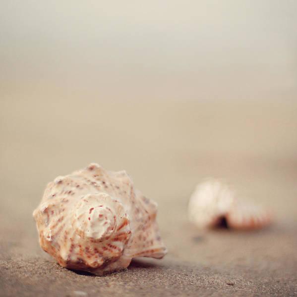 Animal Shell Art Print featuring the photograph Close Up Of Shells On Beach by Copyright© Marianna Di Ferdinando