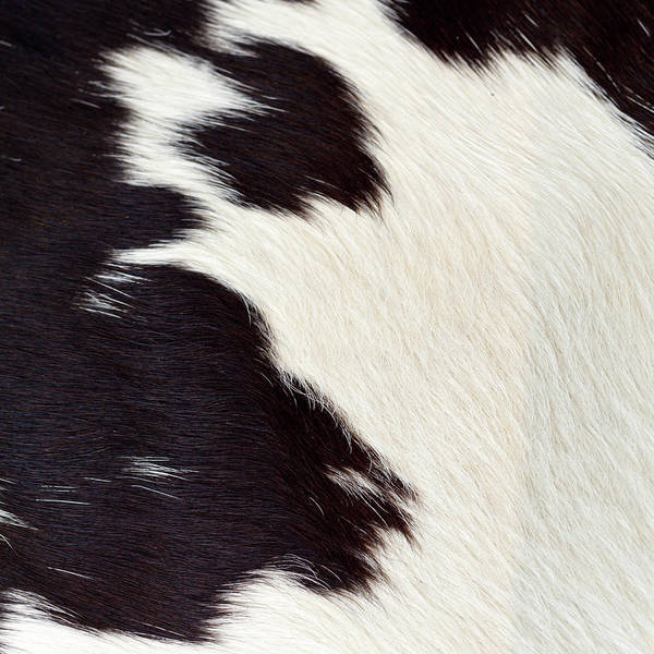 Animal Skin Art Print featuring the photograph Designer Fur by Digiclicks