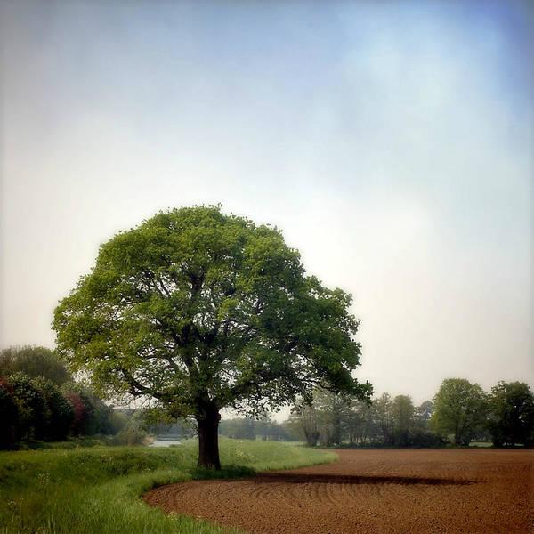 Scenics Art Print featuring the photograph Garden Of Delights by Bob Van Den Berg Photography