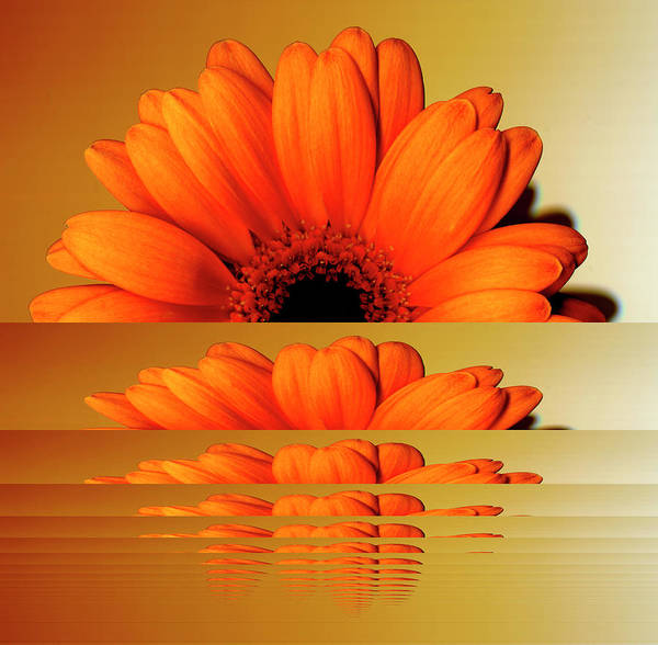 Orange Color Art Print featuring the digital art Gerbera Flower As Rising Sun by Eversofine
