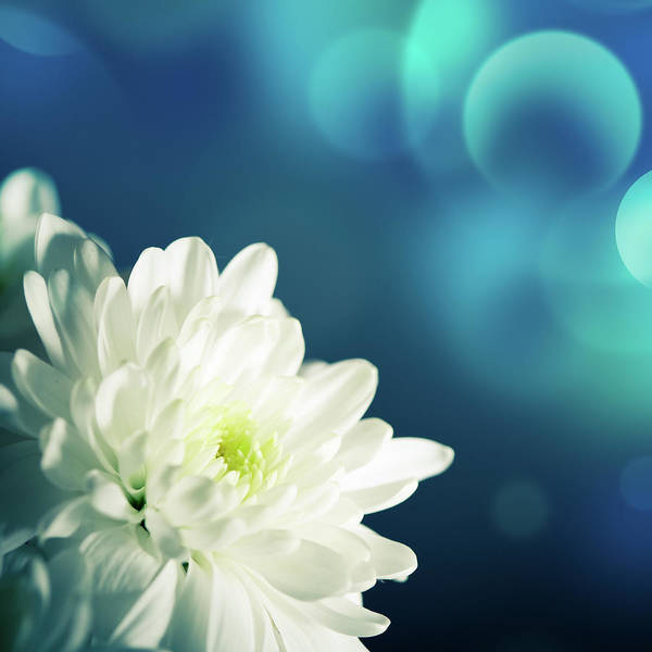 Easter Art Print featuring the photograph Gerbera by Jeja