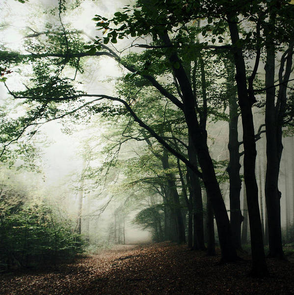 Scenics Art Print featuring the photograph Haunted Forest by Bob Van Den Berg Photography