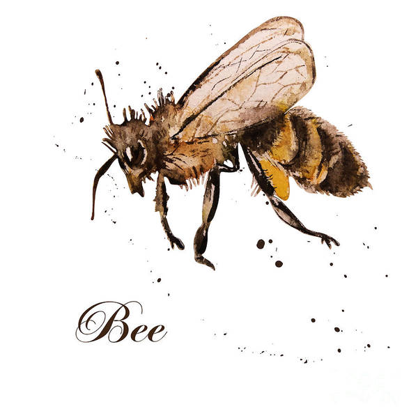 Antenna Art Print featuring the digital art Honey Bee Watercolor Isolation by Knopazyzy