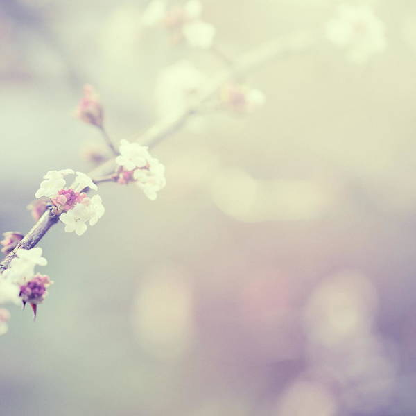Silence Art Print featuring the photograph Little Flowers In Winter by Rike